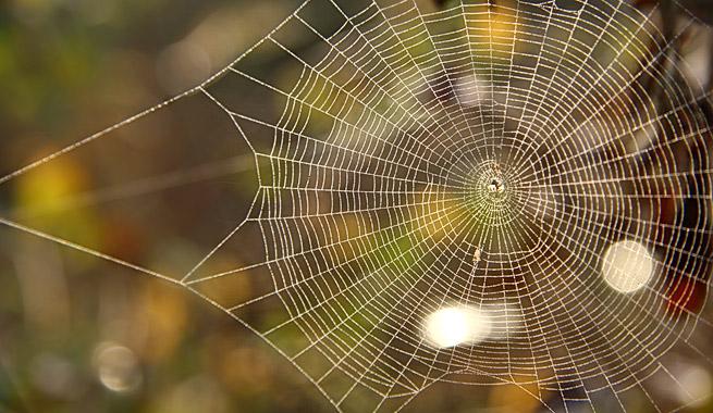 desarrollo-web-tela-de-araña